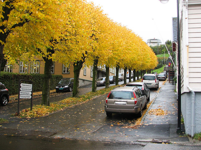 Parkering høst
