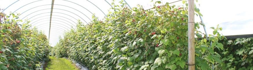 Tveiten bær og gardsprodukter