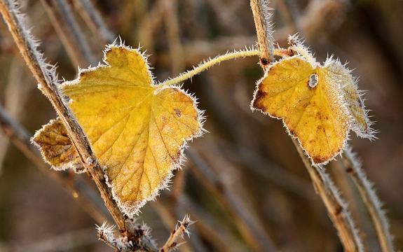 Frost høst