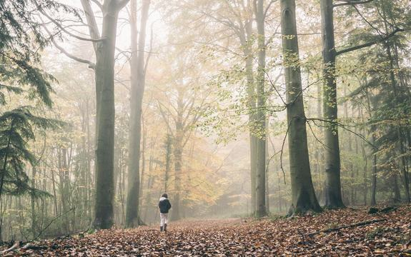 Menneske alene i skogen