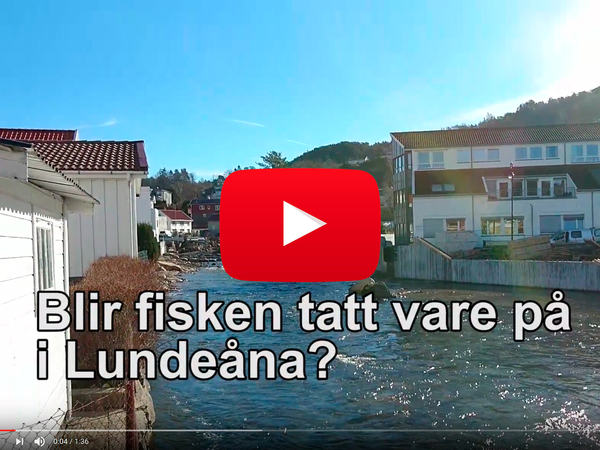 Film om smolten i Lundeåna