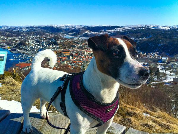 Hund i Egersund på Varberg