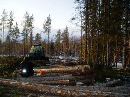 Skogbruk i Gjerdalen
