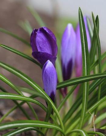 Vårtegn, foto Ann Mari Næss