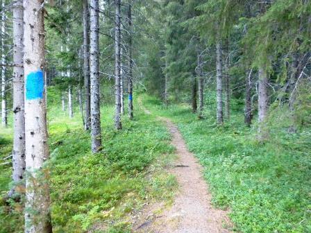 Merket sti gjennom Røsvikdalen
