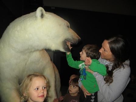Møte med isbjørn