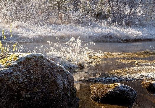 Kuldegrader, foto Knut Mørkhagen