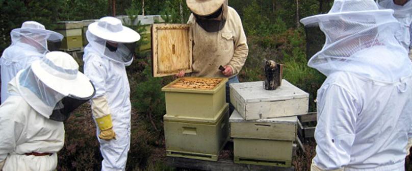 honningproduksjon