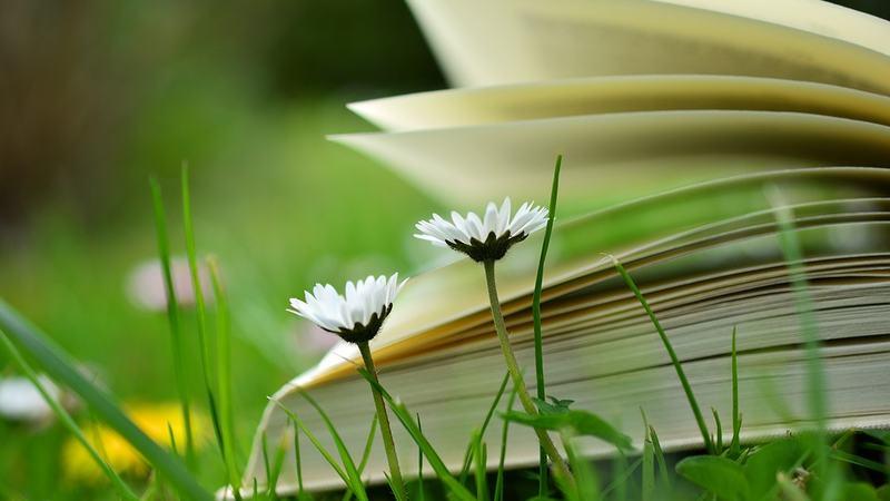 Bok i hagen. Foto: Pixabay.