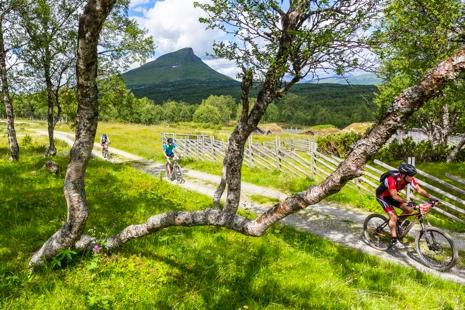 Området vid Mittåkläppen bjuder på fin cykling. FOTO: Anders Robertsson.