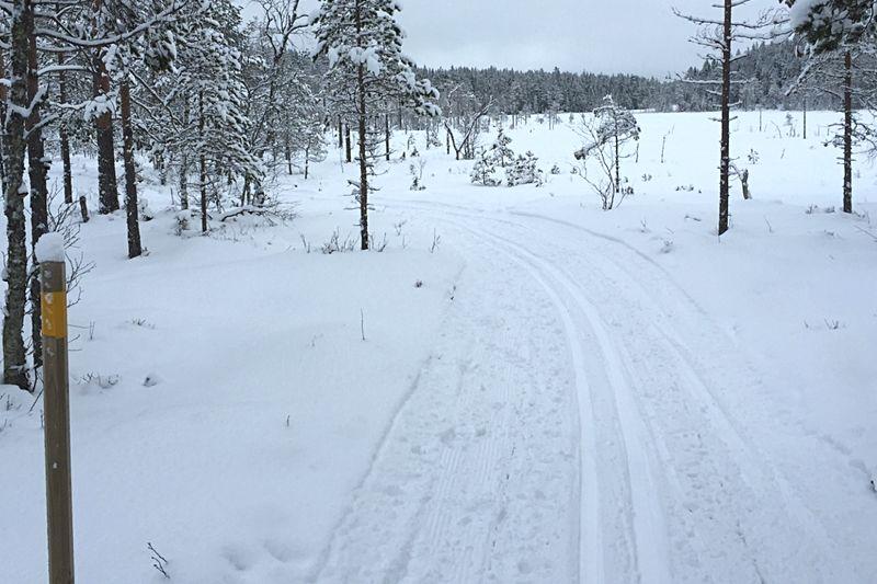 En riktig femmil avgörs i Sörskogsterrängen norr om Falun den 17 mars.