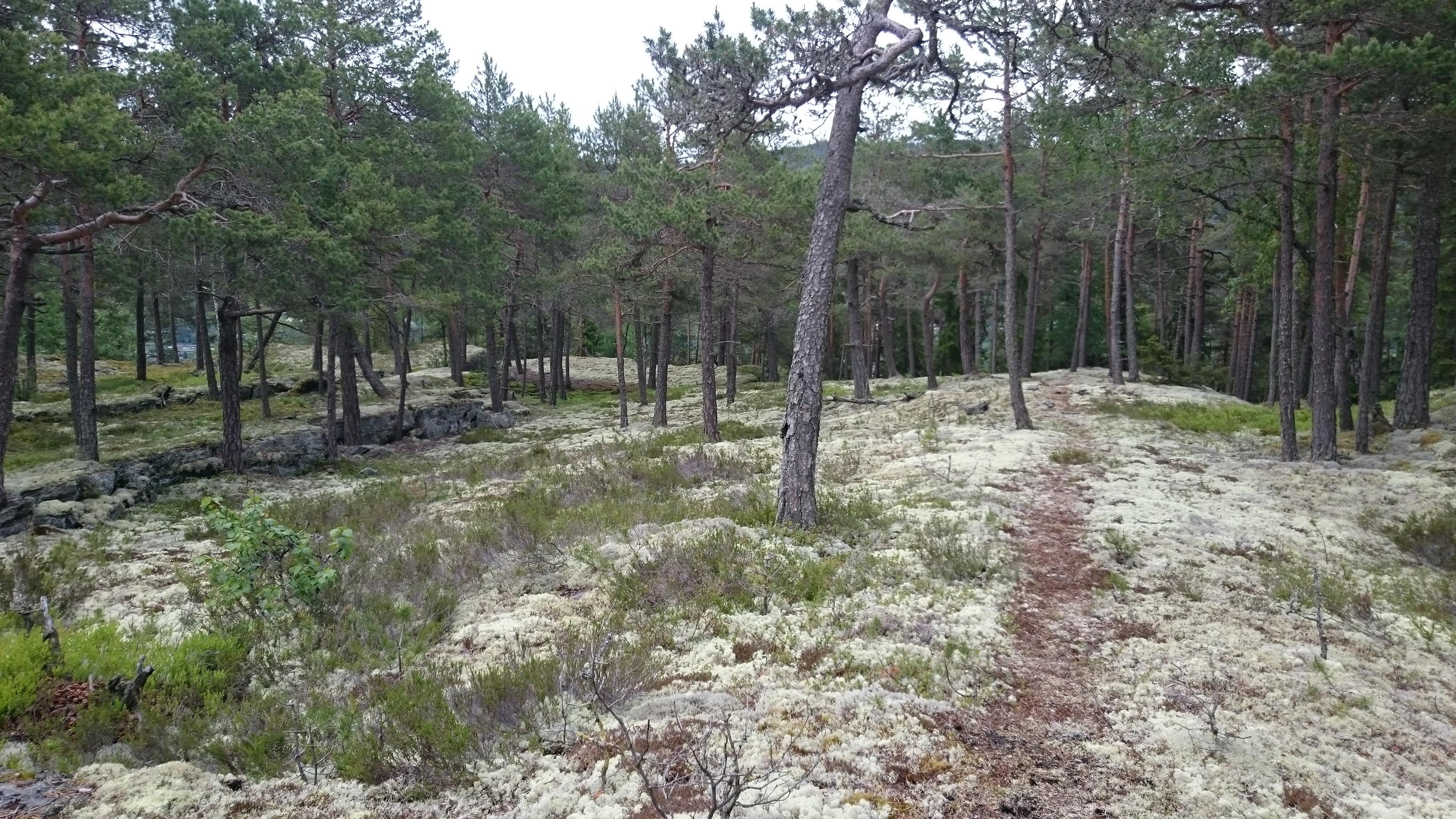 Måsåbergan