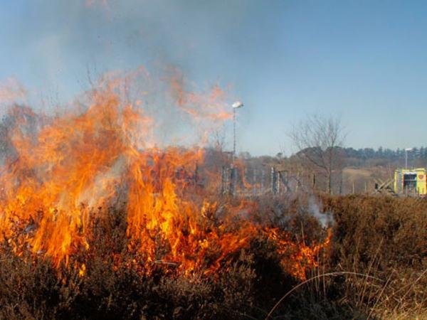 Brann i lyng