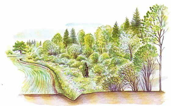 Skogbryn.jpg