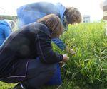 Kurs om matnyttige ville vekster på Sørøya