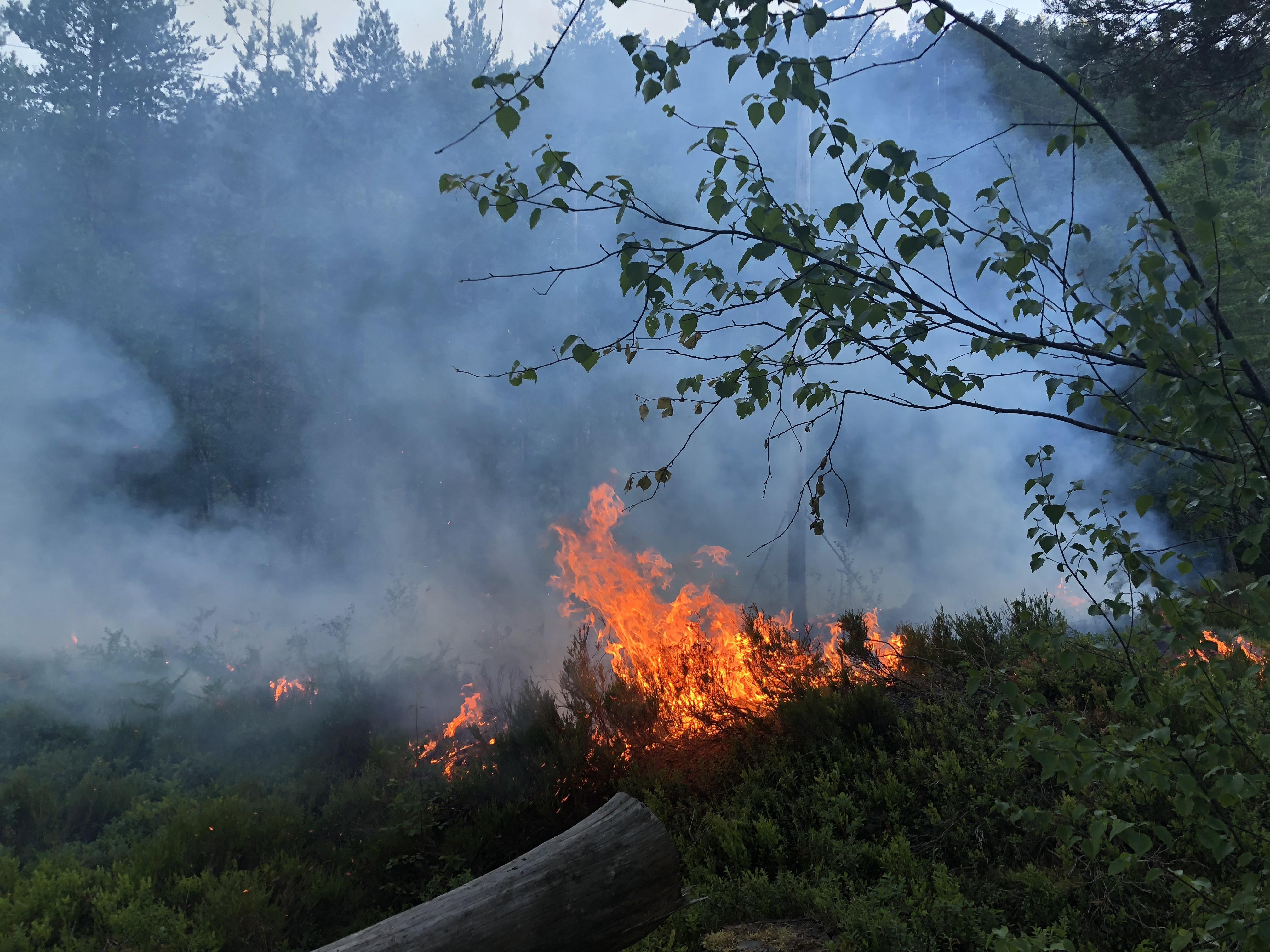 Brann.jpg