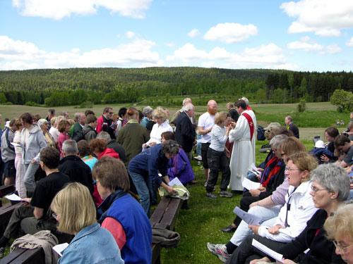 Pinse i Maridalen 2006. Foto: Tor Øystein Olsen