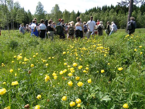Slåttemyradagen 2005. Foto: Arild Andresen