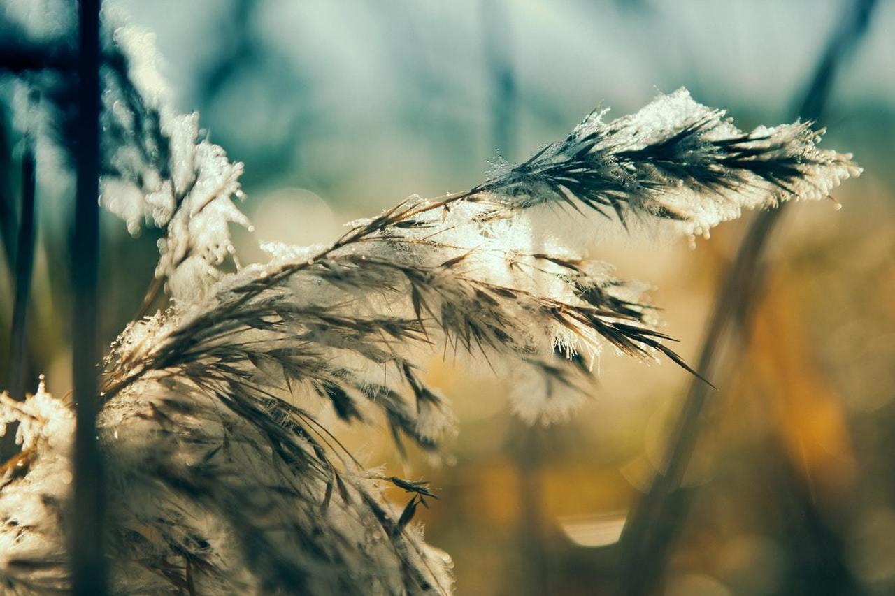 Høst fost løv skog Unsplash