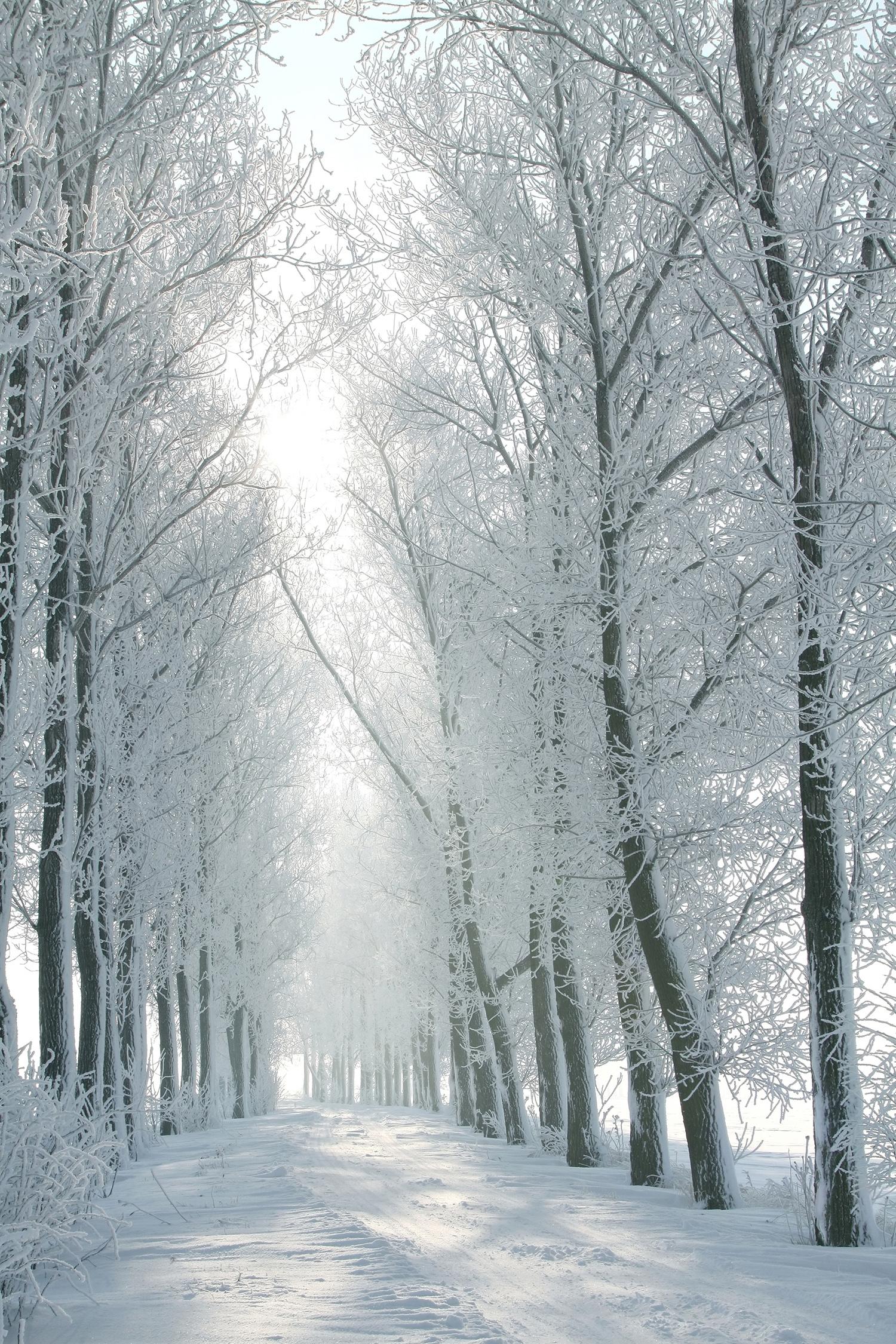 Winterruralroadbetweenthetreescoveredwithfrost.jpg