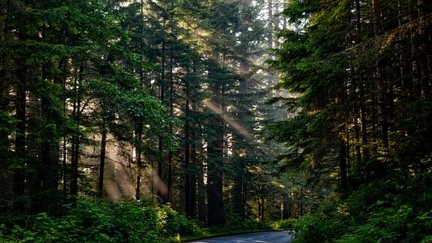 Skog (bilde hentet fra Pixabay)