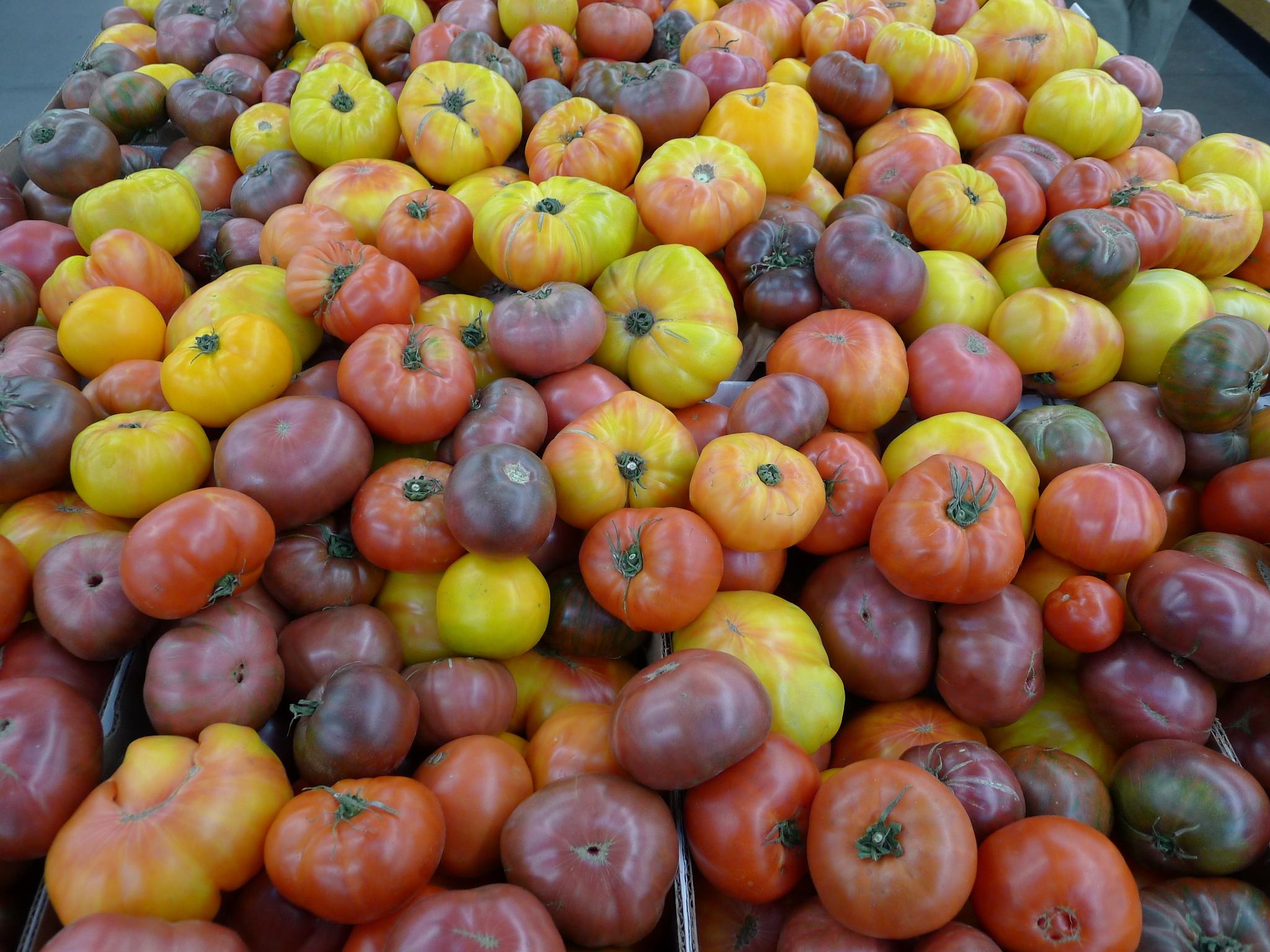 tomater california.JPG