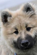 Hundeforskrift