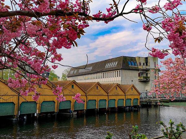 Rådhuset på våren