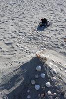 Sandslott og skjellkonkurranse