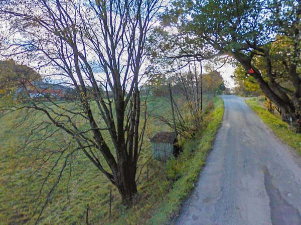 Eiketre på Hellvik