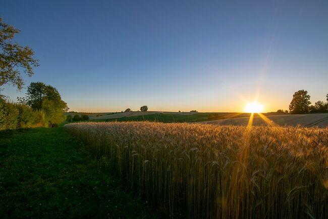 Hveteåker landbruk