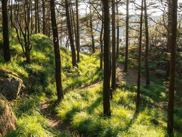 Skog i Hestnes