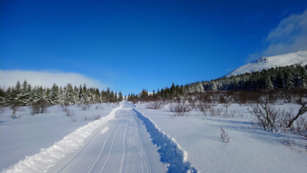 Nytrakka skispor