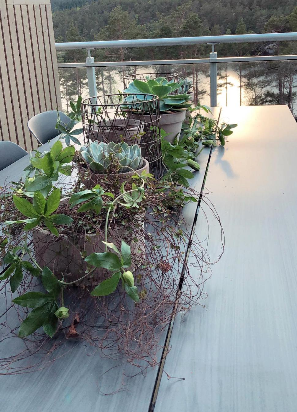 Grønne-planter-på-hagebordet_970x1347.jpg