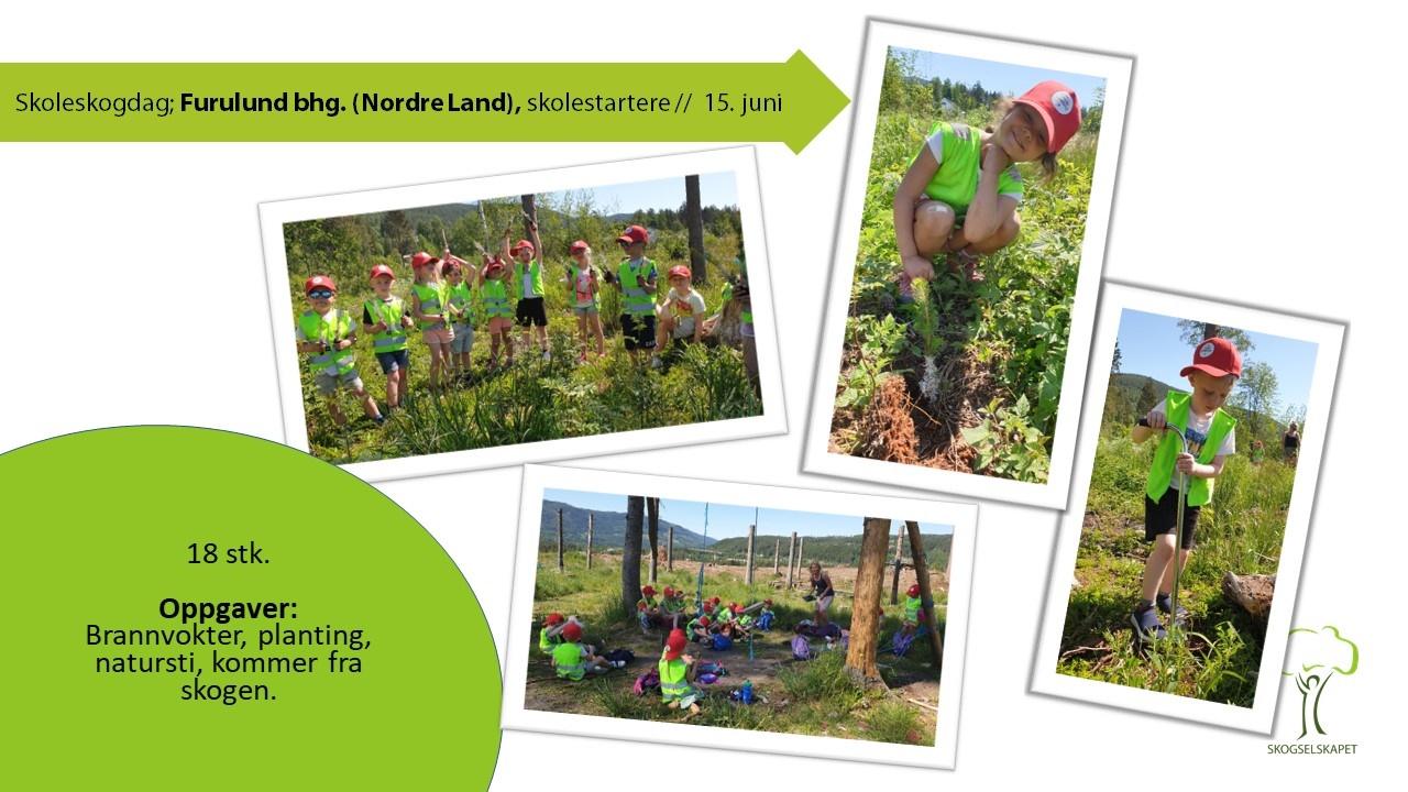 Skoleskogdager 2020 bilderapport_Dokka bhg.jpg