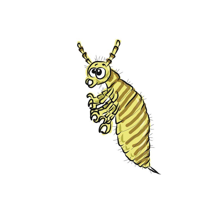 lice-2285926_1920