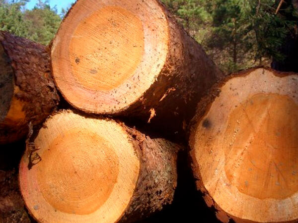 Tømmer