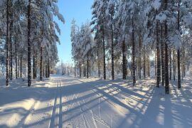 Det råder strålande förhållanden i Vasaloppsarenan inför Vasaåket 2021. FOTO: Vasaloppet.