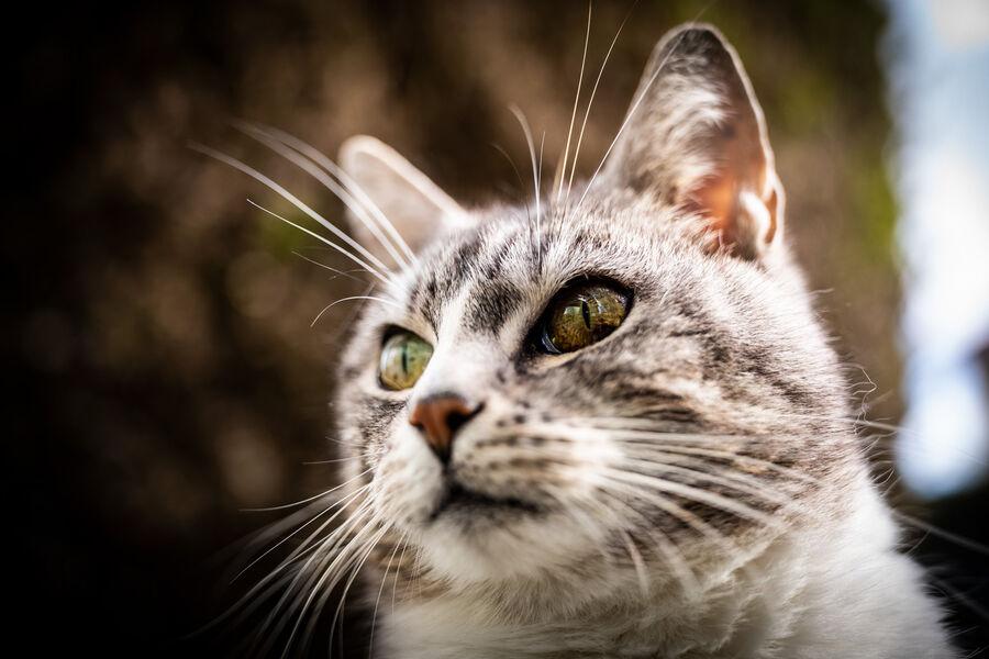 Close+focus+distance+cat