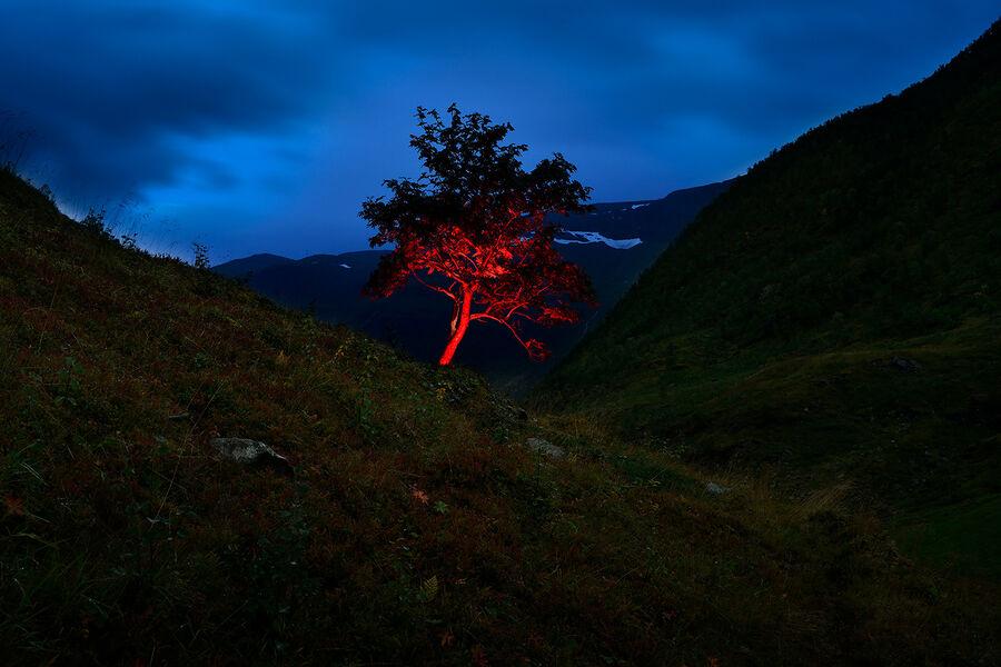 What nature knows V-Gjert Rognli