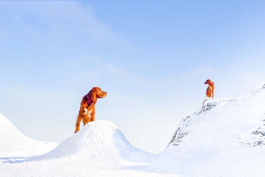 NO-NO-Animals-1420308_Audun Nygaard