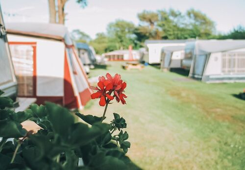 blomst-pa-campingvogn-2