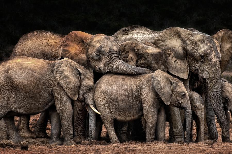 The-Clan-cuddles-by-Josef-Schwarz-CEWE-Photo-Award-Category-winner-Animals