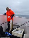 Nordisk Mesterskap i havfiske, Sørvær