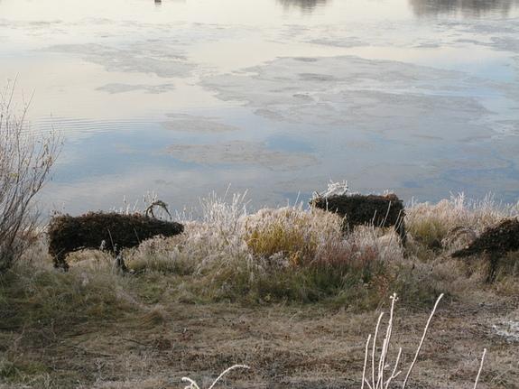 Karasjok, rein, står på elvebredden, frost