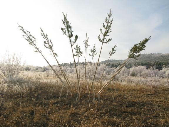 Karasjok, treskulptur,kunstverk vifte frost