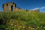 Blomstereng ved kirkeruinen Foto: Helge Viken