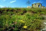 Blomstereng ruin Foto: Helge Viken