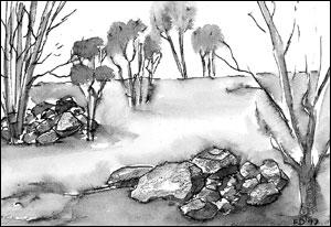 Steinrøyser; Frances Dodman