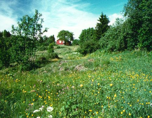 Blankvannsbråtan Foto: Kjell Sandaas